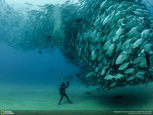 Fotografía National Geographic: David and Goliath