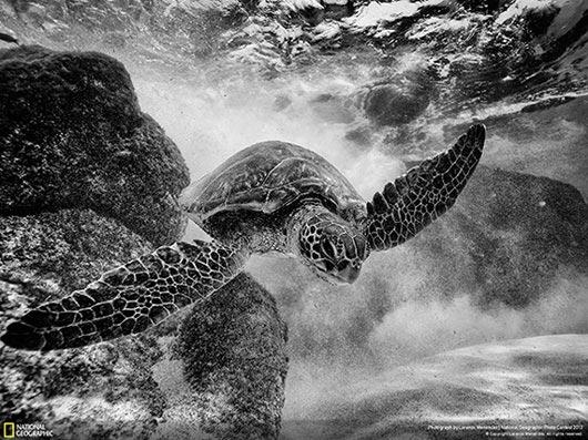 Fotografía National Geographic: Surfing Honu